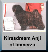 Kirasdream Anji of Immerzu