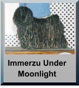 Immerzu Under Moonlight