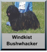 Windkist Bushwhacker