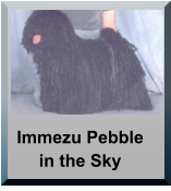 Immezu Pebble in the Sky